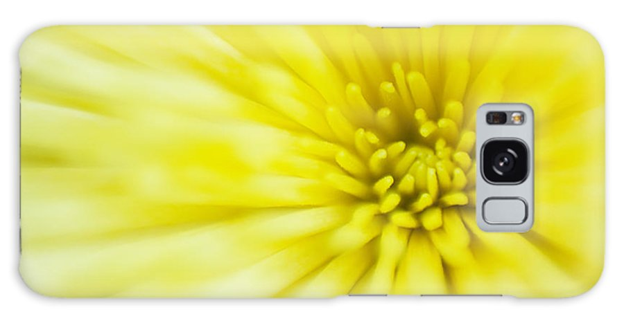 Flower Galaxy S8 Case featuring the photograph Sunshine by Peter Coombes