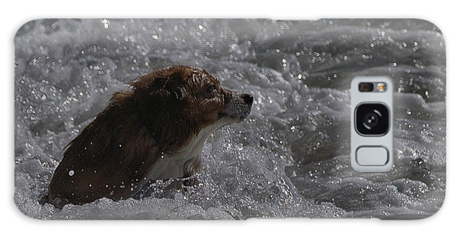 Surf Galaxy S8 Case featuring the photograph Surfer Dog 1 by Michael Gordon