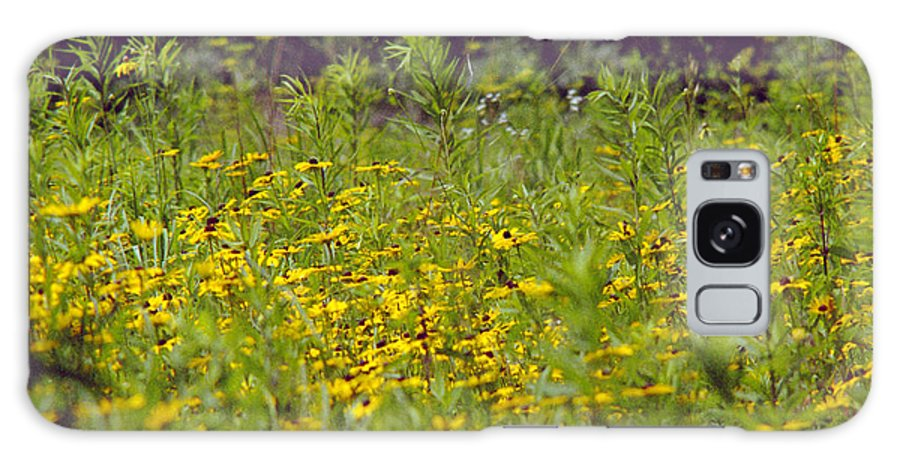 Nature Galaxy S8 Case featuring the photograph Susans In A Green Field by Randy Oberg