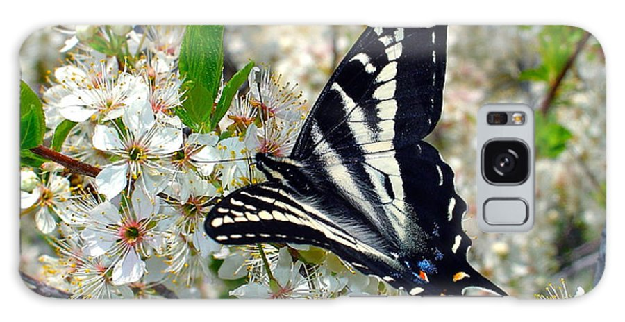 Butterfly Galaxy S8 Case featuring the photograph Swallowtail And Plum Blossoms by Karon Melillo DeVega