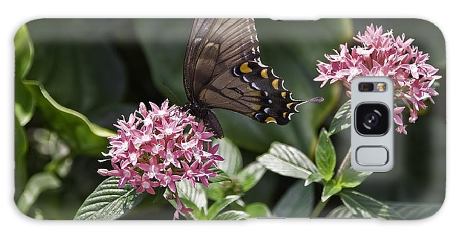 Buttrfly Galaxy S8 Case featuring the photograph Swallowtail Buterfly by Sven Brogren