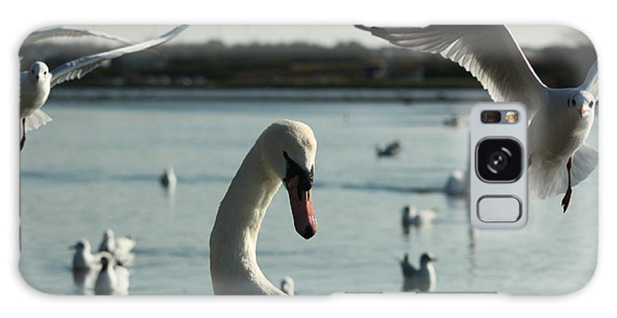 Swans Galaxy S8 Case featuring the photograph Swan And Gulls by Martina Fagan
