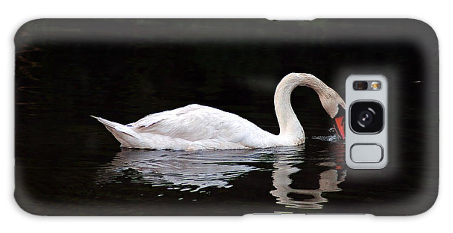 Clay Galaxy S8 Case featuring the photograph Swan Drinking by Clayton Bruster