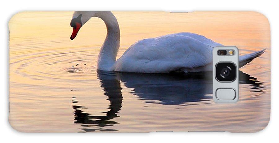 Avian Galaxy S8 Case featuring the photograph Swan Lake by Joe Ng