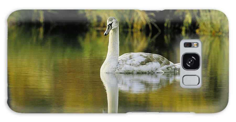 Swan Galaxy S8 Case featuring the photograph Swan Reflection by Steve Somerville