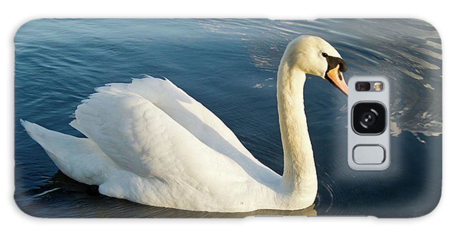 Cygnus Galaxy S8 Case featuring the photograph Swan Strutting by Douglas Barnett
