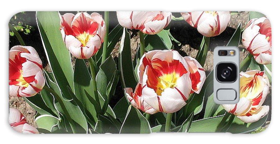 Botanicals.floral Galaxy S8 Case featuring the photograph Swanhurst Tulips by Jolanta Anna Karolska