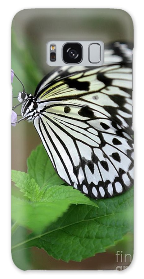 Butterfly Galaxy S8 Case featuring the photograph Sweet Breakfast by Sabrina L Ryan
