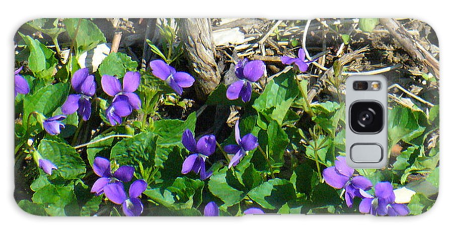 Nature Galaxy S8 Case featuring the photograph Sweet Violets by Peggy King