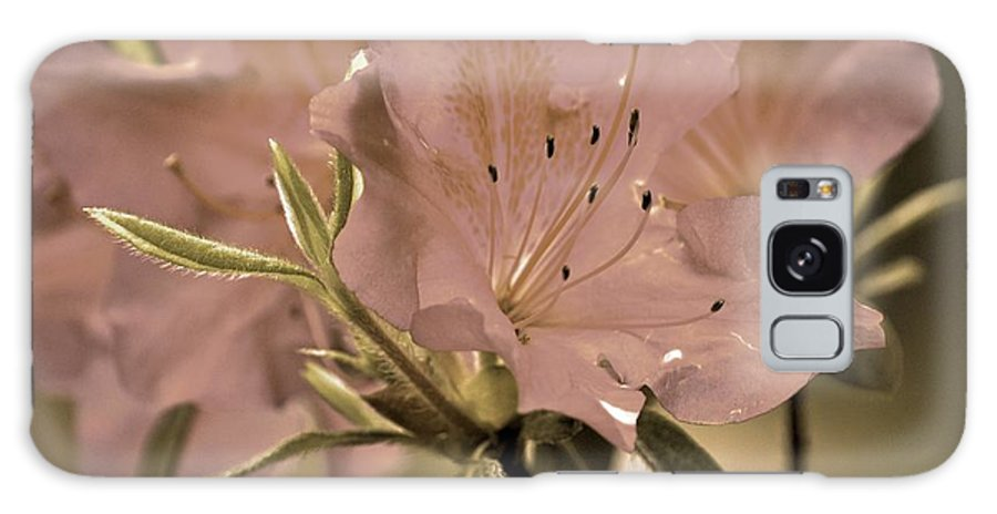 Azaleas Galaxy S8 Case featuring the photograph Sweetness by Donna Shahan