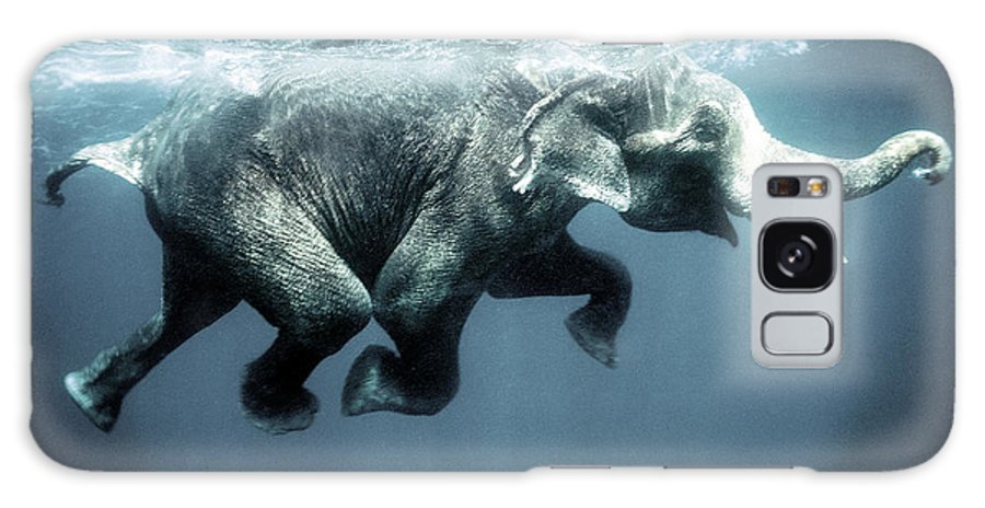 Swimming Galaxy S8 Case featuring the photograph Swimming Elephant by Olivier Blaise