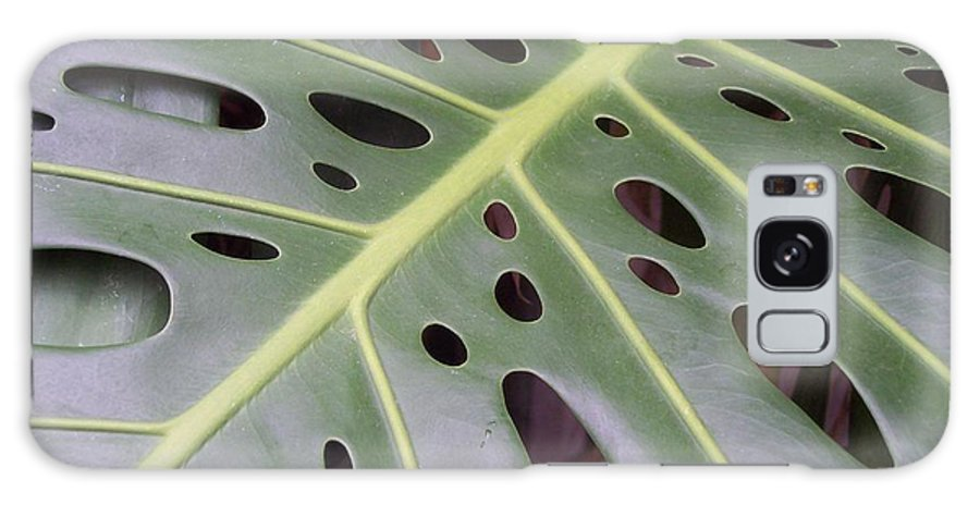 Swiss Cheese Plant Galaxy Case featuring the photograph Swiss Cheese Plant by Michelle Miron-Rebbe
