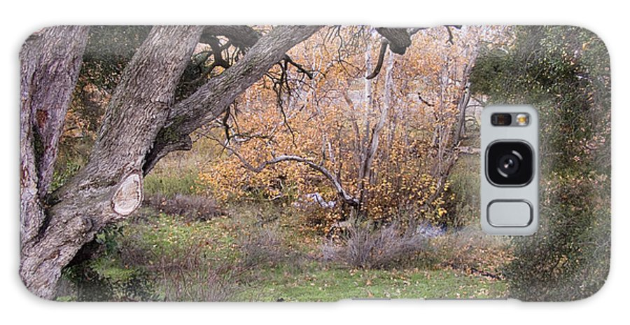Landscape Galaxy S8 Case featuring the photograph Sycamore Grove Fall by Karen W Meyer