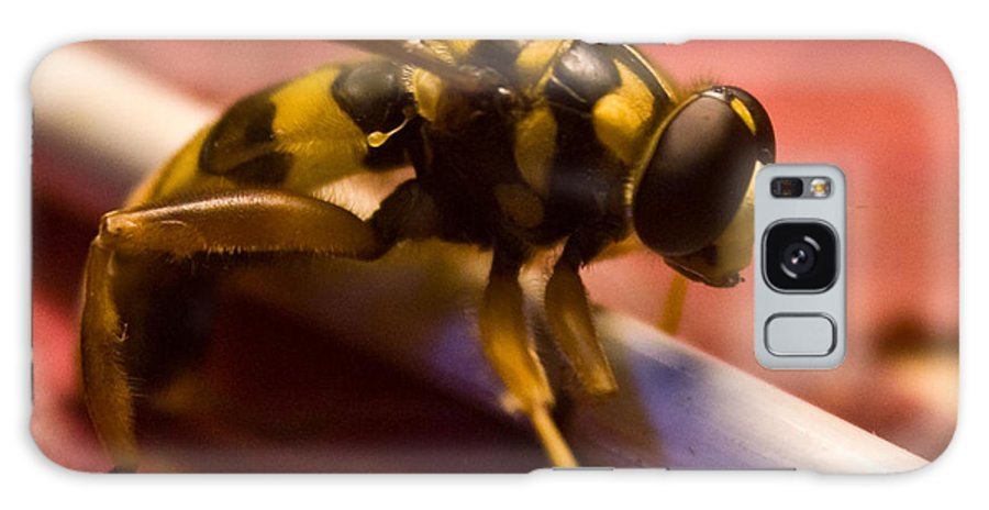 Insect Galaxy Case featuring the photograph Syrphid Fly Poised by Douglas Barnett