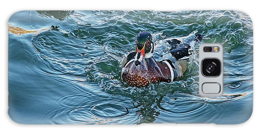 Nature Galaxy Case featuring the photograph Taking a Dip, Wood Duck by Zayne Diamond Photographic