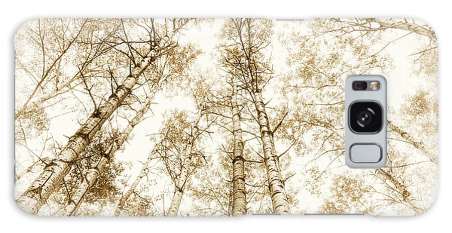 Trees Galaxy S8 Case featuring the photograph Tall Aspens by Elena Elisseeva