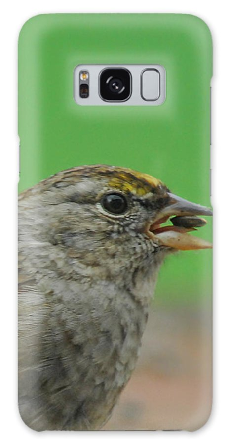 Bird Galaxy S8 Case featuring the photograph Tasty Tidbit by Donna Blackhall