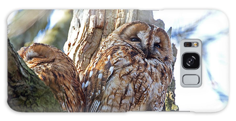 Tawny Owl Galaxy S8 Case featuring the photograph Tawny Owls by Bob Kemp