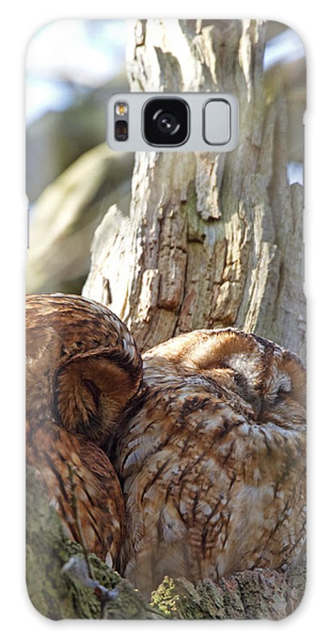 Tawny Owl Galaxy S8 Case featuring the photograph Tawny Owls In Love by Bob Kemp