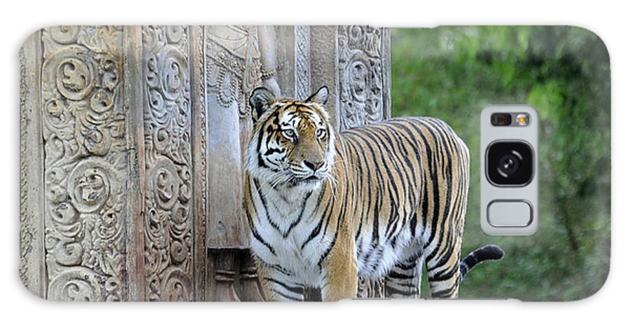 Tiger Galaxy S8 Case featuring the photograph Temple Guardian by Keith Lovejoy