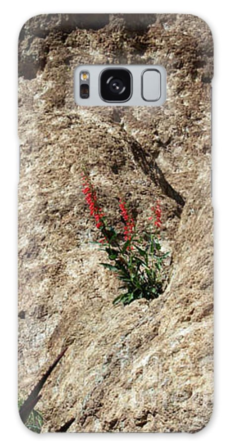Wildflowers; Flowers Galaxy Case featuring the photograph Tenacity by Kathy McClure