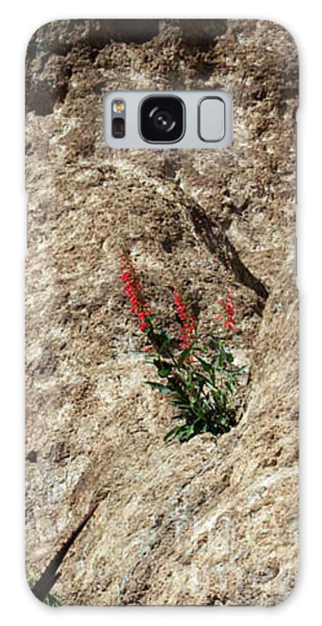 Wildflowers; Flowers Galaxy S8 Case featuring the photograph Tenacity by Kathy McClure
