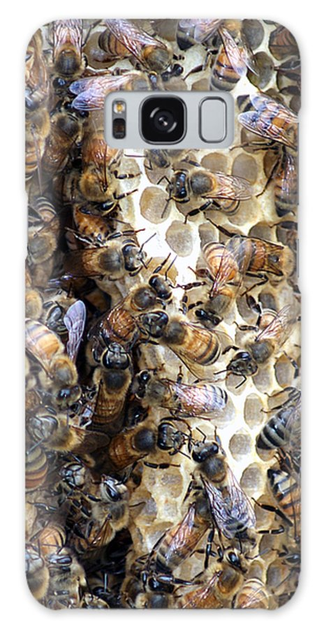 Larva Galaxy S8 Case featuring the photograph The Bees Hive It by Jack Norton