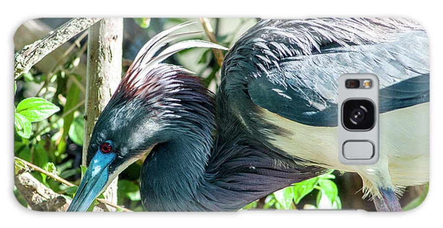 Tricolored Heron Galaxy S8 Case featuring the photograph The Bends by Norman Johnson
