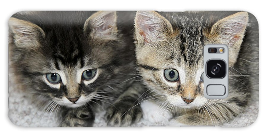 Cat Galaxy S8 Case featuring the photograph The Best Buddies by Teresa Zieba