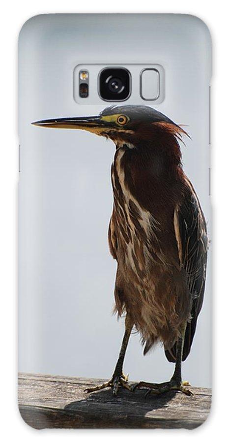 Birds Galaxy S8 Case featuring the photograph The Bird by Rob Hans