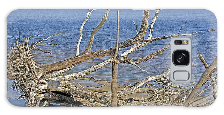 Trees Galaxy S8 Case featuring the photograph The Boneyard by Kenneth Albin