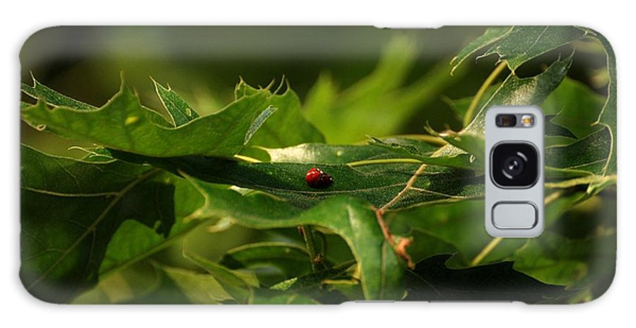 Lady Bugs Galaxy S8 Case featuring the photograph The Busy Lady Bugs by Angie Tirado