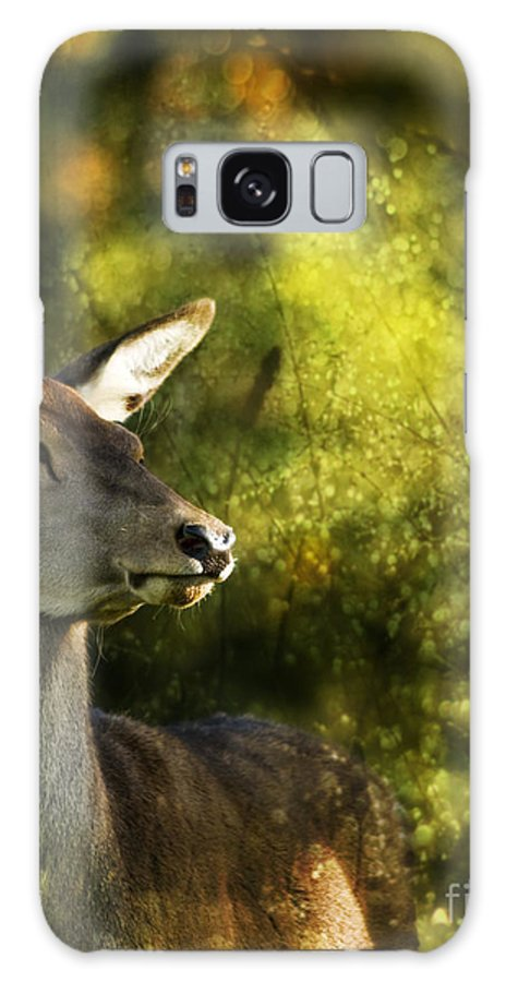 Deer Galaxy S8 Case featuring the photograph The Deer by Angel Ciesniarska