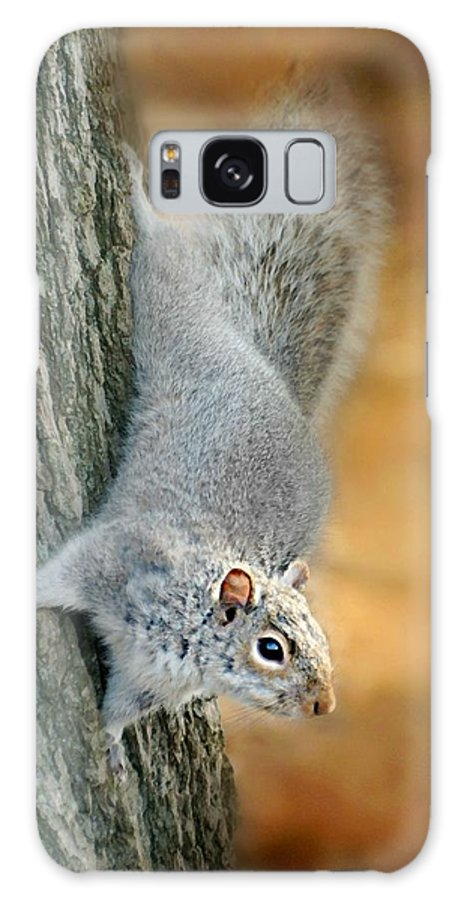 Squirrel Galaxy S8 Case featuring the photograph The Down Side by Diana Angstadt