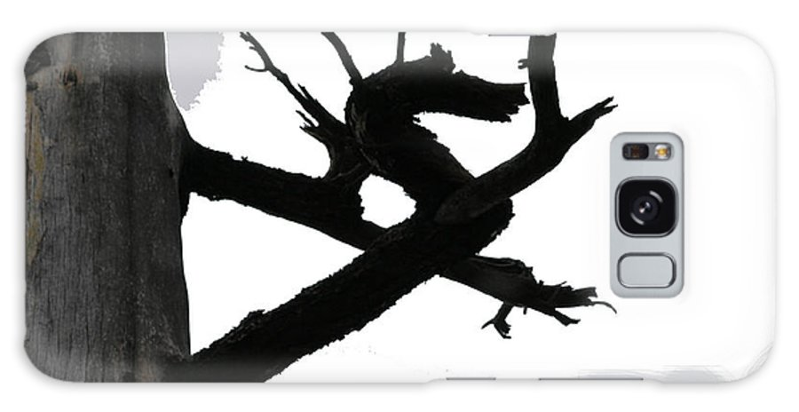 Dragon Galaxy Case featuring the photograph The Dragon Tree by Sin D Piantek