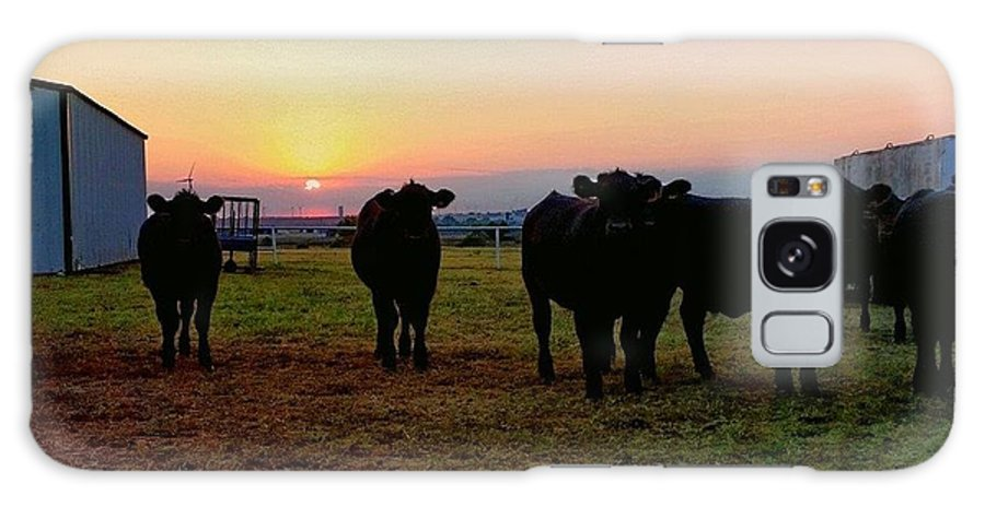 Cattle Galaxy S8 Case featuring the photograph The End To A Long Day by Cheyene Vandament