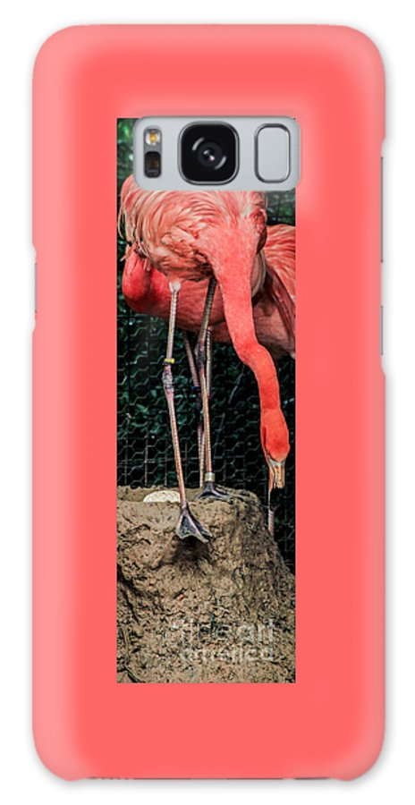 Flamingo Galaxy S8 Case featuring the photograph The Flamingo And Her Egg by Toma Caul