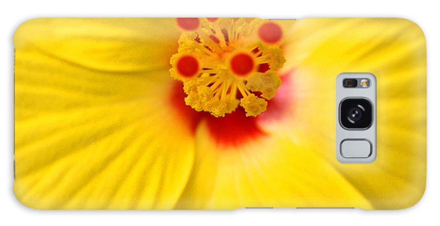 Yellow Galaxy S8 Case featuring the photograph The Flowers Eyes-debbie-may by Debbie May