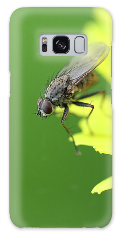 Flies Galaxy S8 Case featuring the photograph The Fly by Danielle Silveira