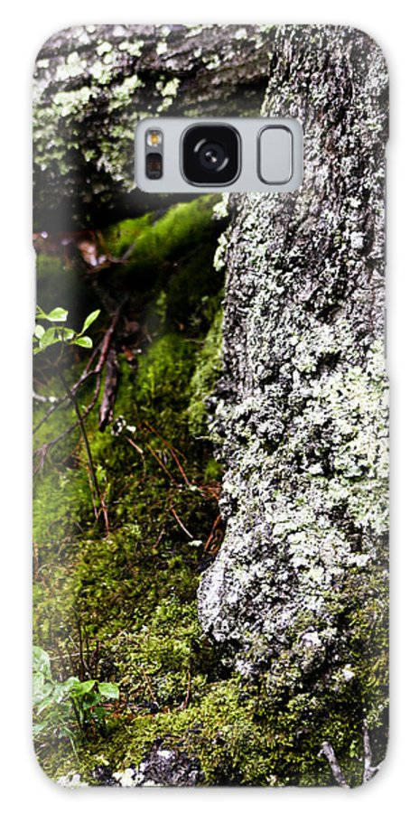 Moss Galaxy S8 Case featuring the photograph The Forest Floor Bluestone State Park West Virginia by Teresa Mucha