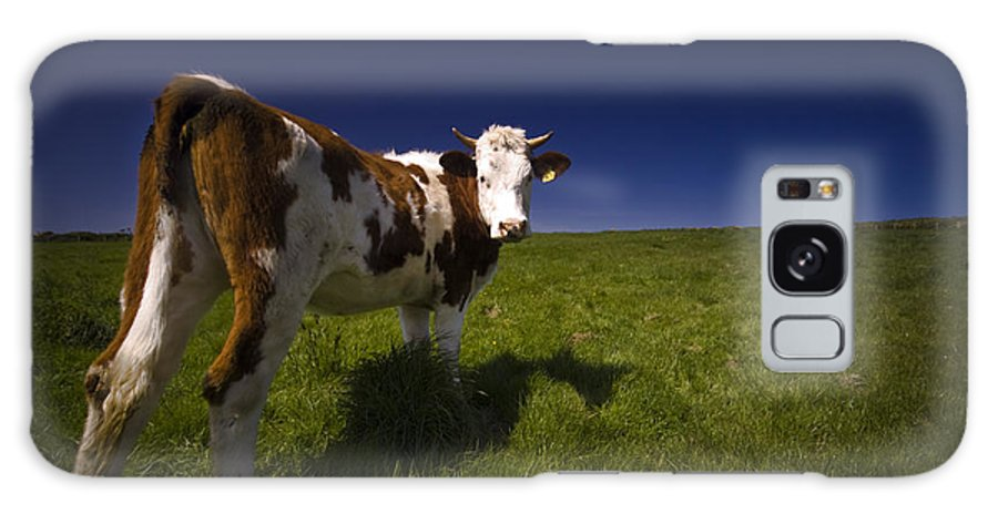 Cow Galaxy S8 Case featuring the photograph The Funny Cow by Angel Ciesniarska