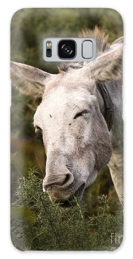 Donkey Galaxy S8 Case featuring the photograph the Funny Donkey by Angel Ciesniarska