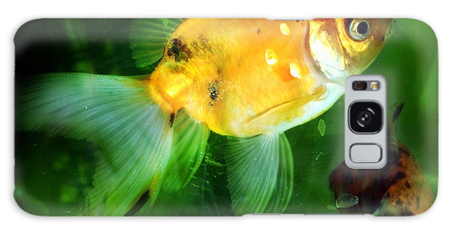 Fish Galaxy S8 Case featuring the photograph The Goldfish by Angel Ciesniarska