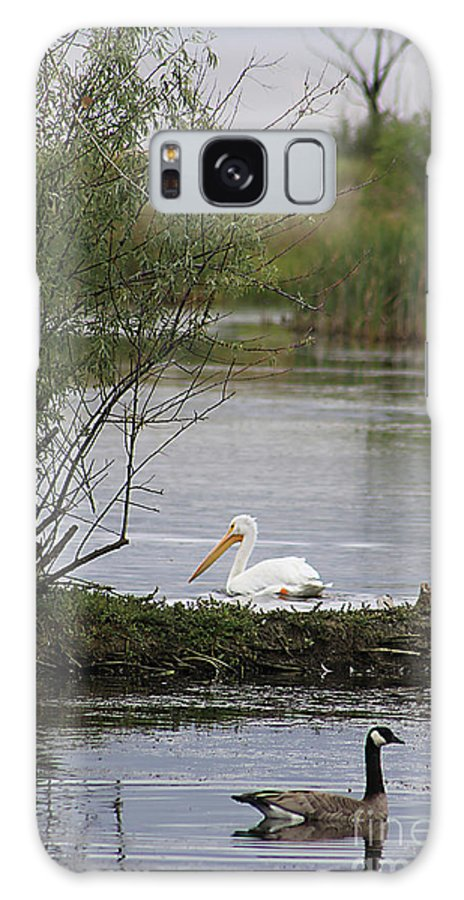 Goose Galaxy S8 Case featuring the photograph The Goose And The Pelican by Alyce Taylor