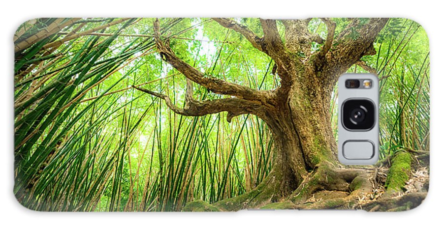 Trees Galaxy S8 Case featuring the photograph The Great Tree by T Brian Jones