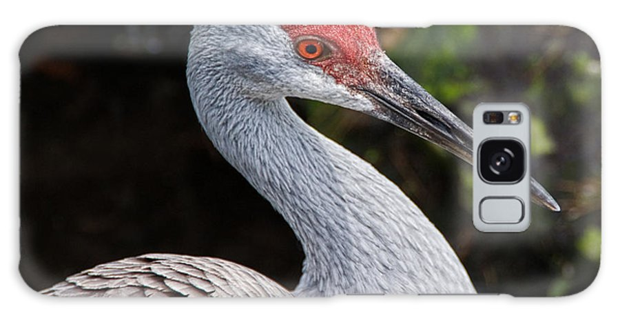 Bird Galaxy S8 Case featuring the photograph The Greater Sandhill Crane by Christopher Holmes