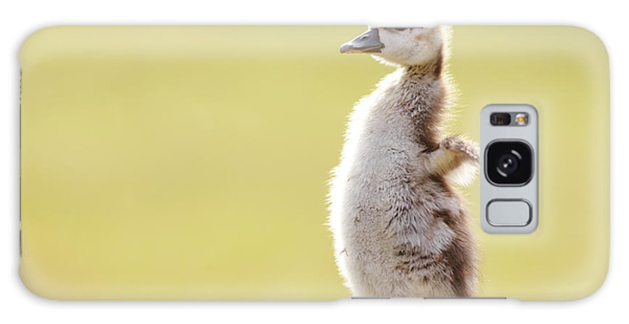 Gosling Galaxy S8 Case featuring the photograph The Happy Chick - Happy Easter by Roeselien Raimond