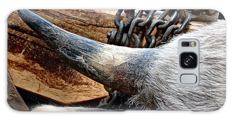 Animal Galaxy S8 Case featuring the photograph The Horn Of The Beast by RC DeWinter
