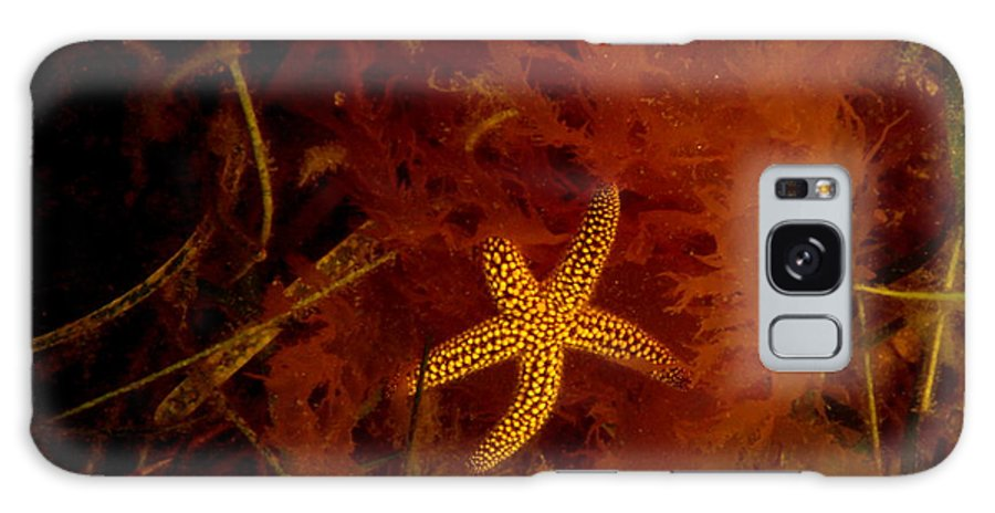 Master Galaxy S8 Case featuring the photograph The Kelp Master by Debbie May