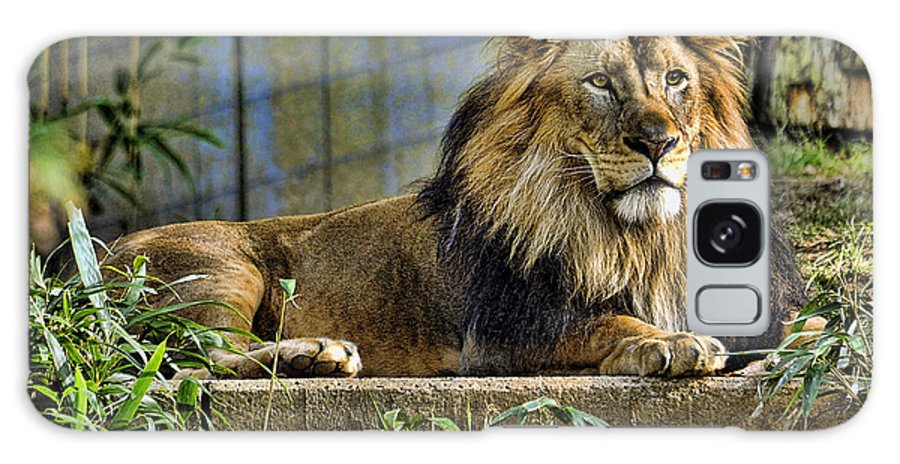 Lion Galaxy S8 Case featuring the photograph The King by Keith Lovejoy